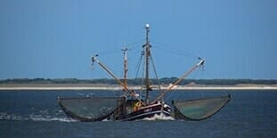marine sheaves applications